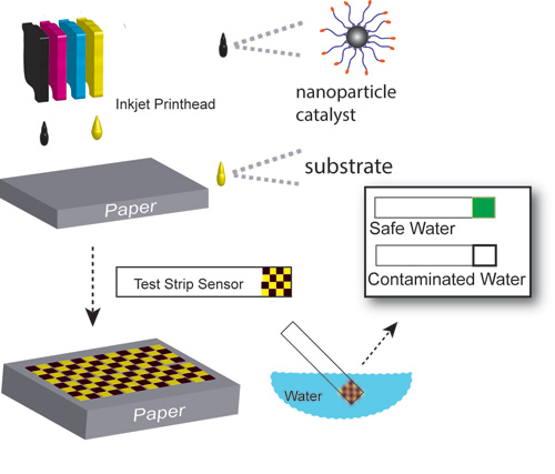 UMass Amherst chemist Vincent Rotello, with researchers in Pakistan, is developing and testing sensitive new nanoparticle-based test strips printed on an inkjet printer for detecting disease-causing bacteria in drinking water. They hope the invention will improve the health of millions around the world.  Graphic courtesy of Vincent Rotello, UMass Amherst