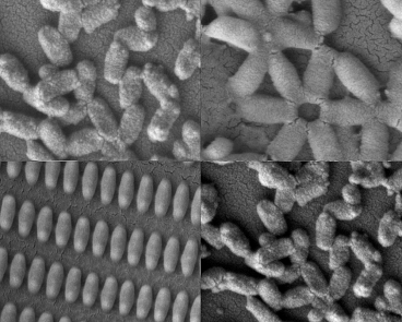 Researchers at MIT and the University of North Carolina created these coated nanoparticles in many shapes and sizes.  Image credit: Kevin E. Shopsowitz and Stephen W. Morton