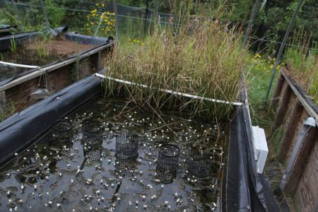 This mesocosm used by the Center for the Environmental Implications of Nanotechnology (CEINT) is basically a small, self-contained ecosystem with embedded sensors that is used to study how nanoparticles interact with all aspects of a natural system.