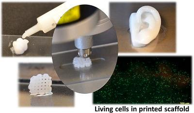 Nanocellulose-based bioink is a suitable hydrogel for 3D bioprinting with living cells. Image reprinted with permission from: 3D Bioprinting Human Chondrocytes with Nanocellulose–Alginate Bioink for Cartilage Tissue Engineering Applications Kajsa Markstedt, Athanasios Mantas, Ivan Tournier, Héctor Martínez Ávila, Daniel Hägg, and Paul Gatenholm Biomacromolecules 2015 16 (5), 1489-1496