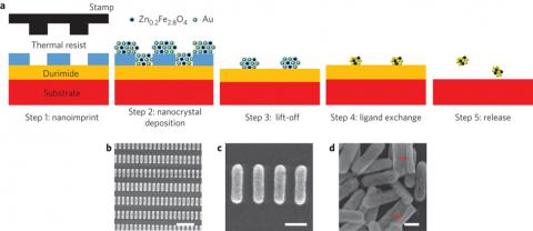 Schematic of the Zn0.2Fe2.8O4:Au hybrid nanorod fabrication process. Step1: a Si substrate with a spin-coated bilayer of Durimide and thermal resist is imprinted with a nanorod-pillar-patterned stamp. Step2: a mixture of Au and Zn0.2Fe2.8O4 nanocrystals is deposited by spin-coating. Step3: resist lift-off. Step4: ligand-exchange of the patterned nanocrystal-based nanorods with NH4SCN. Step5: nanorod release on dissolving the Durimide layer.