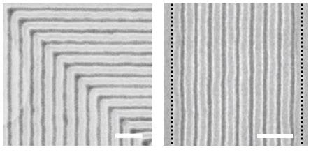 Scanning electron micrographs of block copolymer films assembled on graphene/germanium chemical patterns with 90 degree bends (left side) and with density multiplication by a factor of 10 (right side). The black dotted lines (right side) indicate the period of the graphene/germanium chemical pattern, in which the period of the assembled block copolymer is reduced by a factor of 10 due to density multiplication. The scale bars are 200 nm.