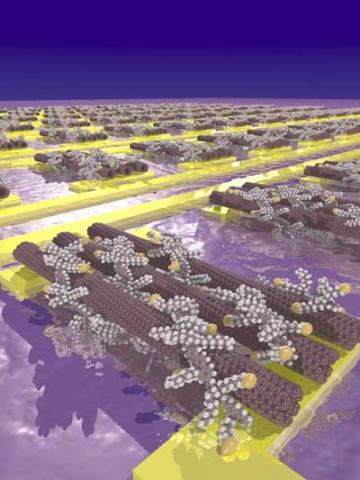 This is an artist's impression of carbon nanotubes wrapped in polymers with thiol side chains (yellow spheres) and assembled on gold electrodes. (Image: Arjen Kamp)